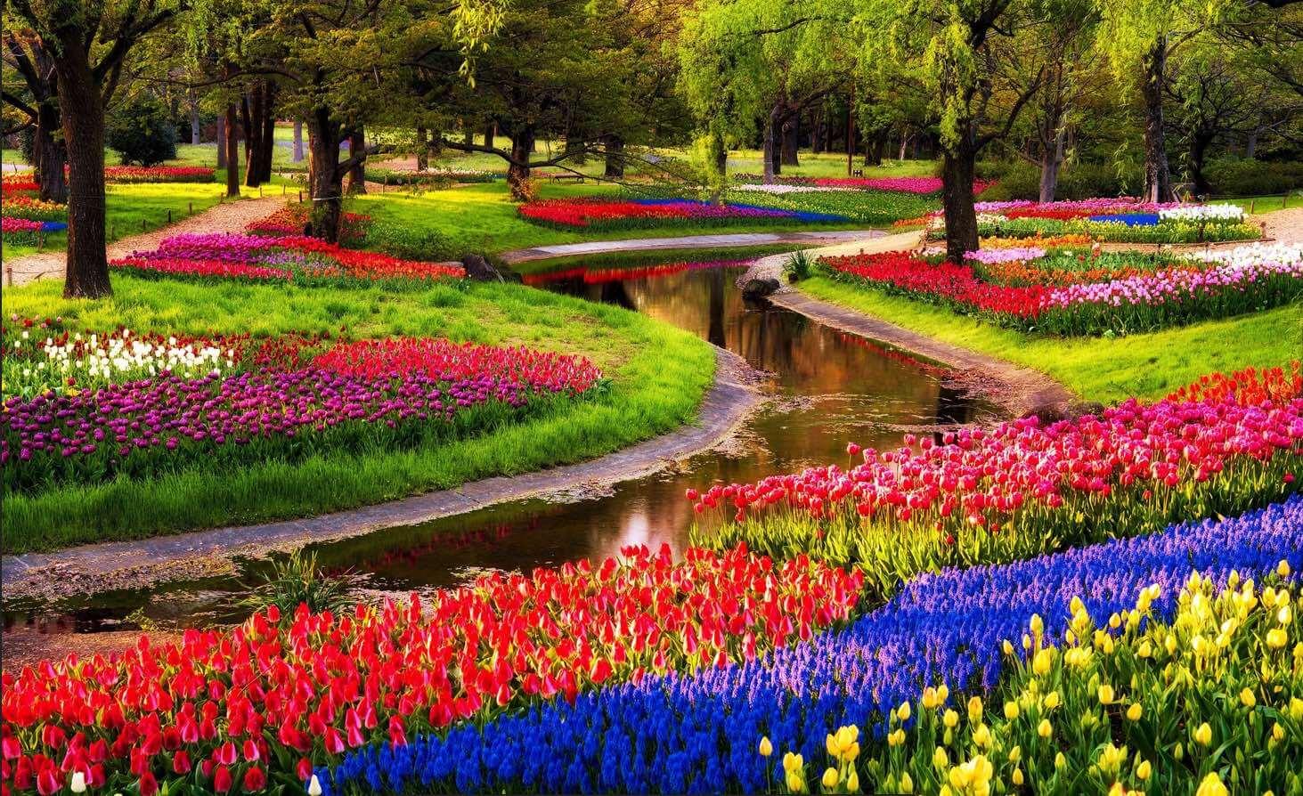 tulipani esi scuola italiana